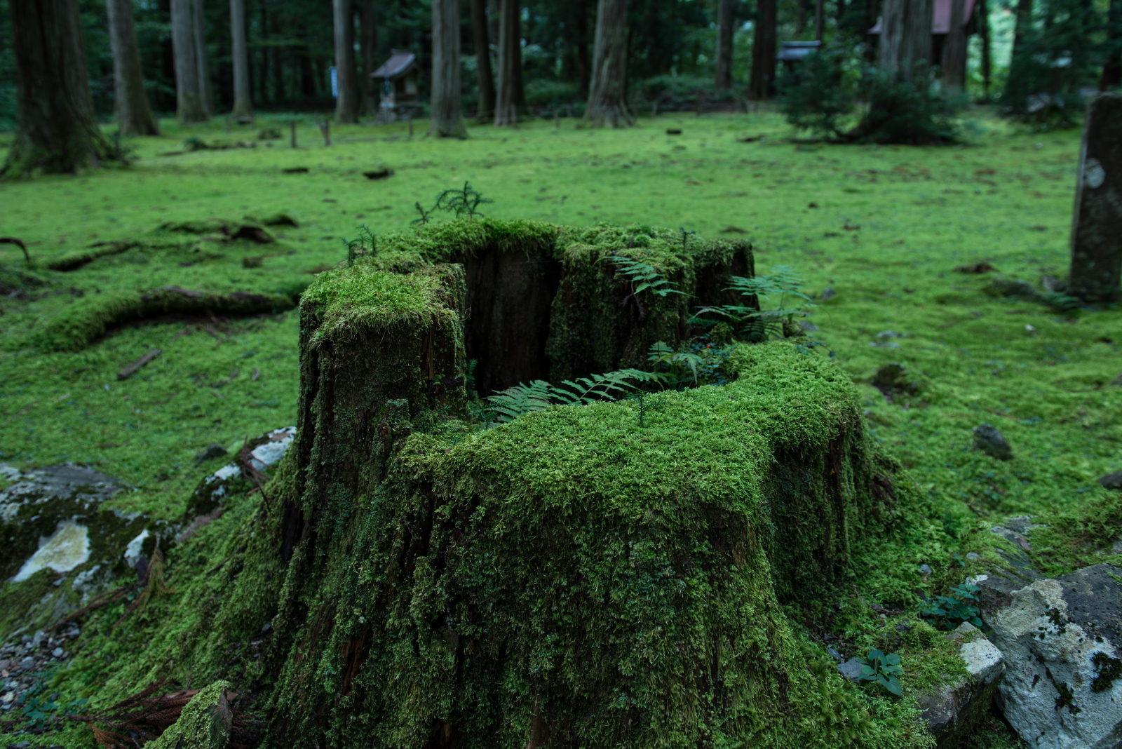 Moss stool
