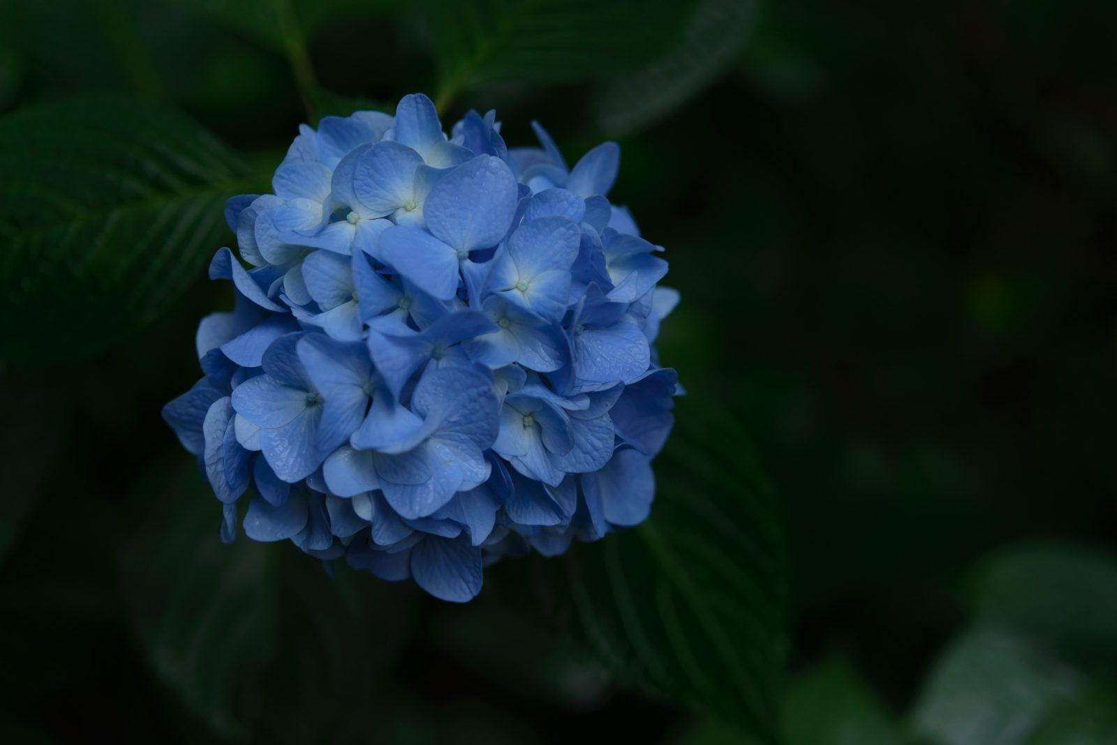 Blue gathering